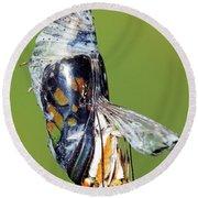 Malachite Butterfly Metamorphosis Round Beach Towel