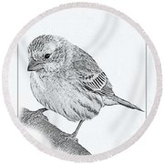 Male House Finch Sketch  Round Beach Towel