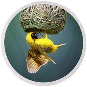 Masked Weaver At Nest Round Beach Towel