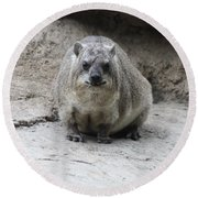 Rock Hyrax Headshot Round Beach Towel