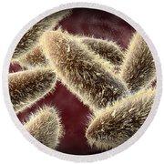 Microscopic View Of Paramecium Round Beach Towel