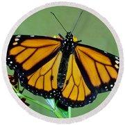 Monarch Butterfly Round Beach Towel