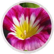 Morning Glory Named Red Ensign Round Beach Towel