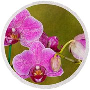 Moth Orchid Round Beach Towel