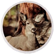 Mule Deer Doe Round Beach Towel