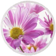 Mums Flowers Against White Background Round Beach Towel