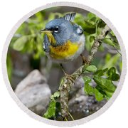 Northern Parula Round Beach Towel