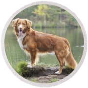 Nova Scotia Duck Tolling Retriever Round Beach Towel