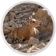 Nubian Ibex Round Beach Towel