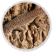 Ocellated Lizard Timon Lepidus Round Beach Towel