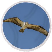 Osprey In Flight Spreading His Wings Round Beach Towel