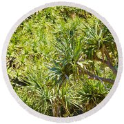 Pandanus Palm Tree Round Beach Towel