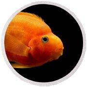 Parrot Fish Round Beach Towel