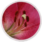 Pink Lilly Round Beach Towel