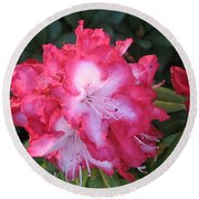 Pink Rhododendron Round Beach Towel