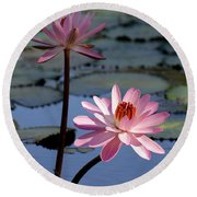 Pink Water Lily In The Spotlight Round Beach Towel