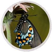 Pipevine Swallowtail Butterfly Round Beach Towel
