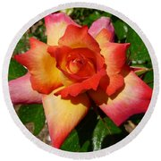 Rainbow Sorbet Rose Round Beach Towel by Denise Mazzocco