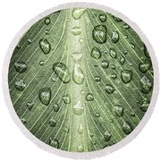 Raindrops On Green Leaf Round Beach Towel