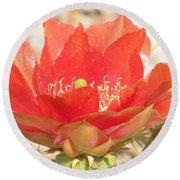 Red Cactus Flower Round Beach Towel