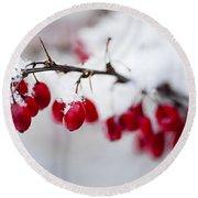 Red Winter Berries Under Snow Round Beach Towel
