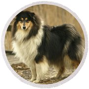 Rough Collie Dog Round Beach Towel
