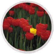 Rows Of Red Tulips With One Yellow Tulip Round Beach Towel