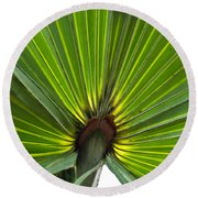 Saw Palmetto  Round Beach Towel