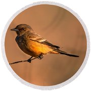 Say's Phoebe Round Beach Towel by Robert Bales