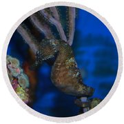 Seahorse And Coral Round Beach Towel