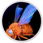 Sem Of A Fly Drosophila Round Beach Towel