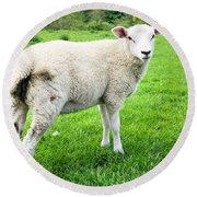 Sheep In Field Round Beach Towel