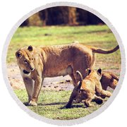 Small Lion Cubs With Mother. Tanzania Round Beach Towel