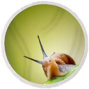 Snail On Green Stem Round Beach Towel by Johan Swanepoel