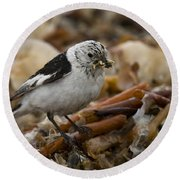 Snow Bunting Round Beach Towel