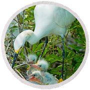 Snowy Egret Tending Young Round Beach Towel