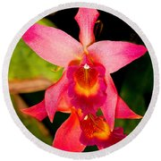 Sophronitis Orchid Round Beach Towel