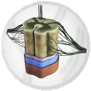 Spinal Cord Round Beach Towel