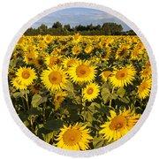 Sunflowers At Dawn Round Beach Towel