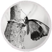 Swallowtail Butterfly Round Beach Towel