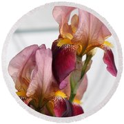 Tall Bearded Iris Named Indian Chief Round Beach Towel
