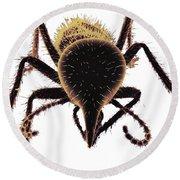 Termite Soldier Round Beach Towel