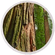 The Beautiful And Massive Giant Redwoods Sequoia Sempervirens In Redwoods National Park. Round Beach Towel by Jamie Pham
