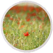 The First Poppy Of The Field Round Beach Towel