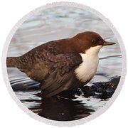 The White-throated Dipper Round Beach Towel
