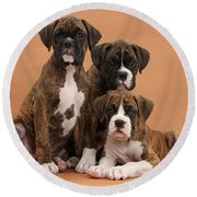 Three Boxer Puppies Round Beach Towel