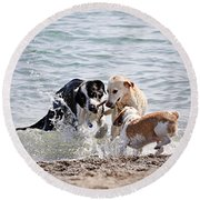 Three Dogs Playing On Beach Round Beach Towel
