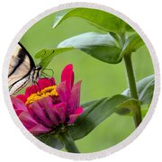 Tiger Swallowtail Butterfly On Zinnia Round Beach Towel
