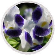 Torenia From The Duchess Mix Round Beach Towel by J McCombie