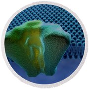Transmembrane Receptor Round Beach Towel
